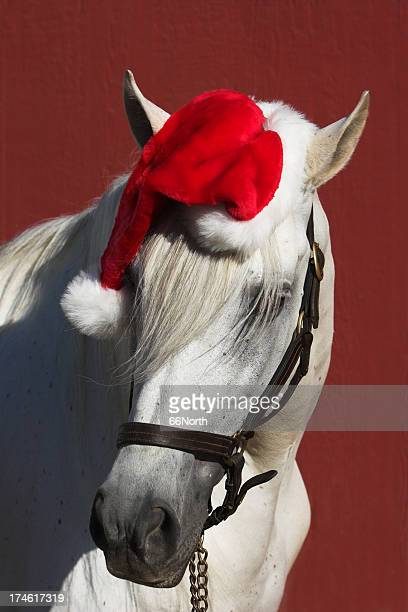 equine santa - christmas horse stock pictures, royalty-free photos & images