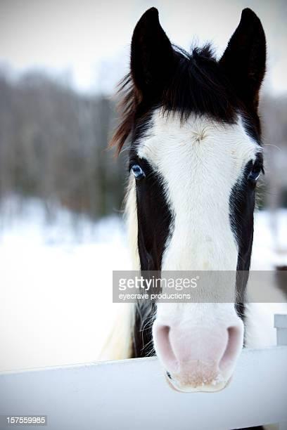 equine series winter pasture horses