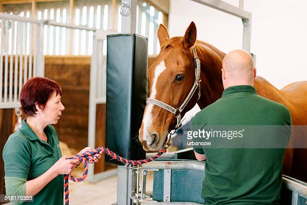 Hospital veterinario de caballos