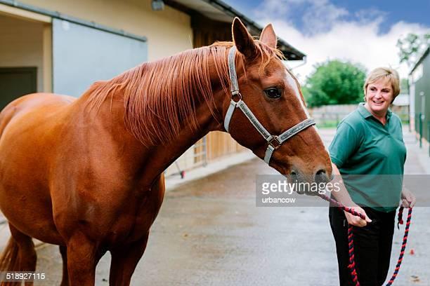 equinos hospital veterinário - cavalo família do cavalo - fotografias e filmes do acervo
