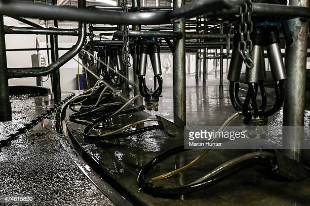 Equipment and utensils for milking cows are seen at a Synlait dairy farm on May 25 2015 in Christchurch New Zealand New Zealandbased dairy producer...