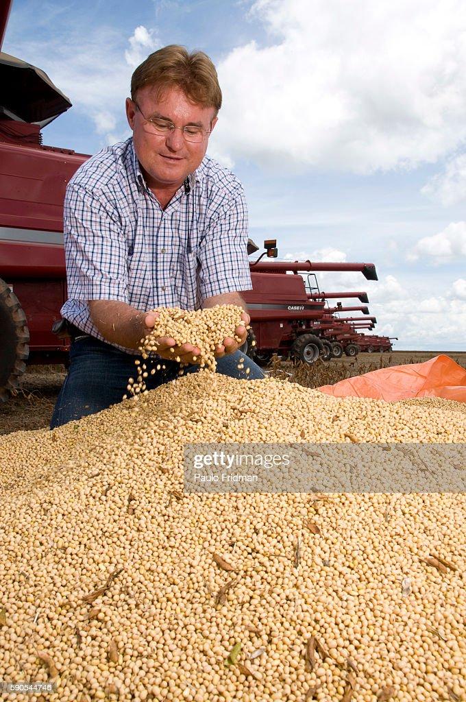 Single Soybean
