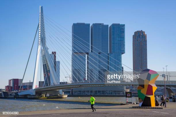 Erasmusbrug or Erasmus Bridge in Rotterdam Netherlands on 25 February 2018 The famous cable bridge is named after Desiderius Erasmus who was from...