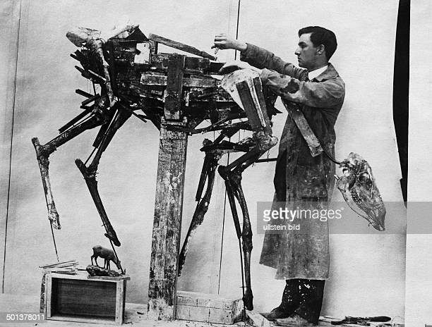 Erection of the skeleton of the vertebrate presumably a deer undated probably in the 1910's