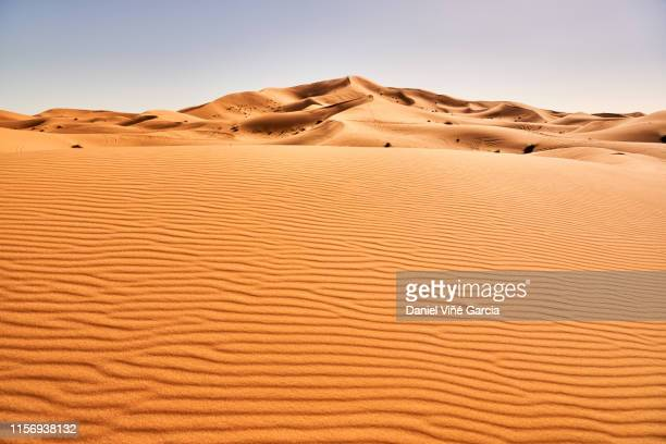 erg chebbi sand dune at sunrise, morocco, africa - sahara stock pictures, royalty-free photos & images