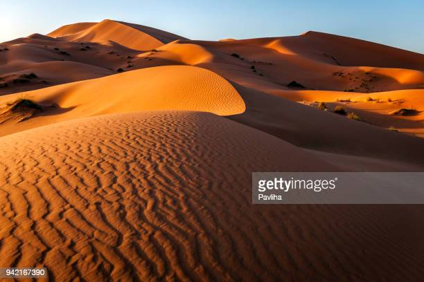 erg chebbi sand dune at sunrise, morocco,  north africa - merzouga stock pictures, royalty-free photos & images