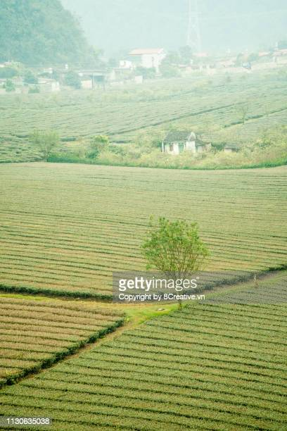 erial view of moc chau, son la, vietnam in early morning mist. - son la stock pictures, royalty-free photos & images