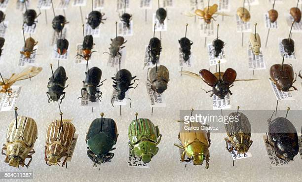 Eric Mathison 15–year–old bug collector with the Clovers 4–H entomology club Eric has more than 1000 pinned bug specimens and looking for more...