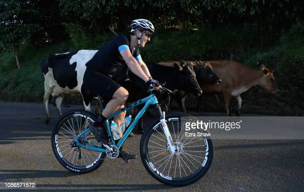 Eric Zinterhofer of the United States rides by a group of cows during day 2 of La Ruta de Los Conquistadores on November 2 2018 in Terramall Costa...