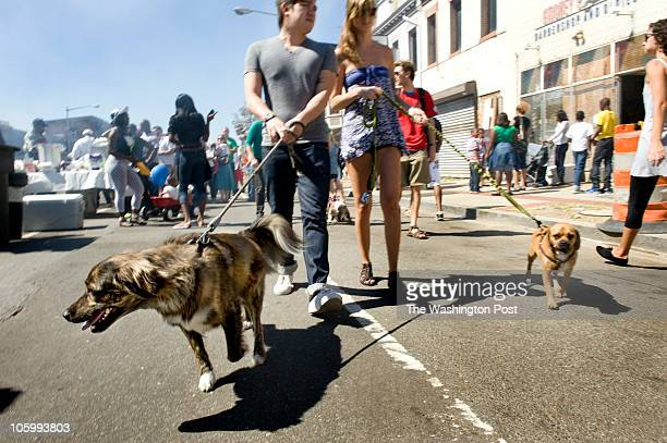 """Erik Anderson with Cali Tucker take australian shepherd """"Derby"""" and puggle """"Stryker"""" through the H Street Festival today in Washington, DC on..."""