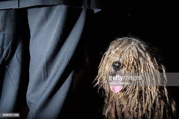 Erik Rothman stands next to Uragano a Bergamasco Sheep Dog following the announcement that the Westminster Dog Show would introduce seven new dog...
