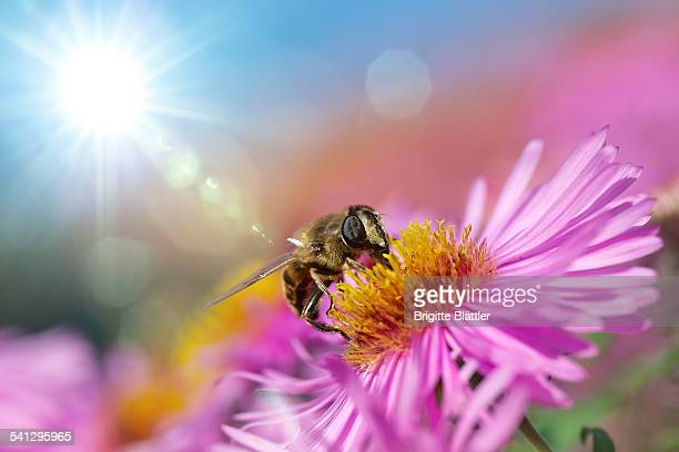 60 Top Drone Bee Pictures, Photos, & Images - Getty Images