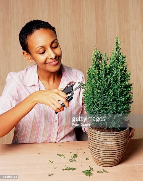 Eritrean woman pruning conifer