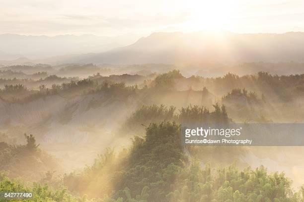 Erliao Golden Daybreak