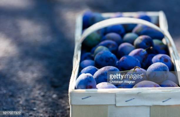 ernte im garten - plum stock pictures, royalty-free photos & images