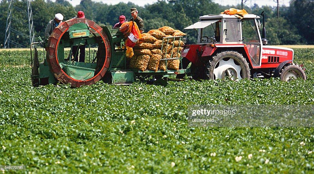Kartoffelernte in Niedersachsen Pictures | Getty Images