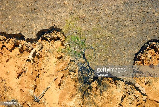 Erosion aggravated by cattle and/or fire Marion Downs Wildlife Sanctuary northern Western Australia