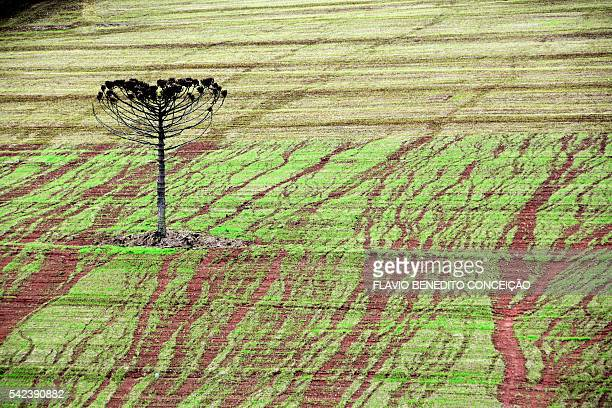 erosion caused by rain - soil erosion stock photos and pictures