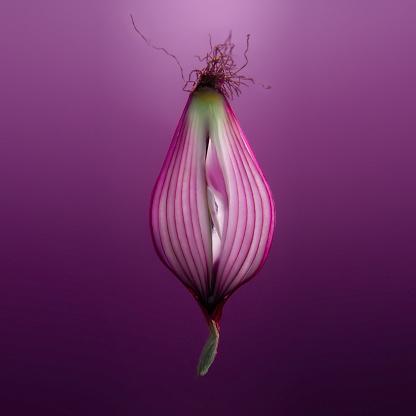erotic onion - gettyimageskorea