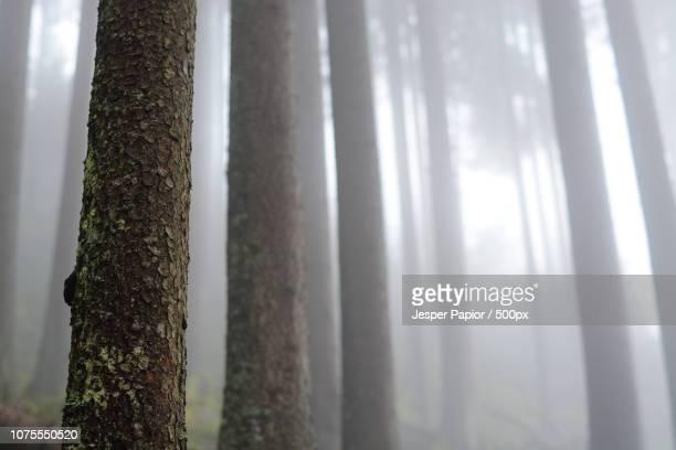 (mist)ery - mistery foto e immagini stock