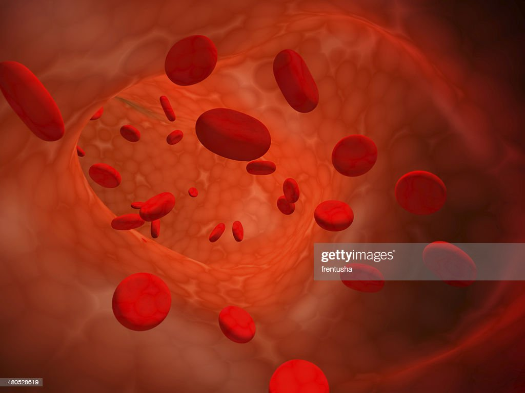 Erythrocytes : Stock Photo