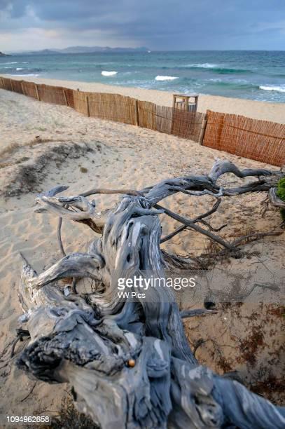 Es Cavallet beach Ibiza Spain