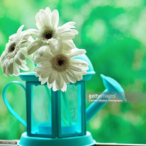 Esas pequeñas cosas que me hacen sonreír... ~ Day