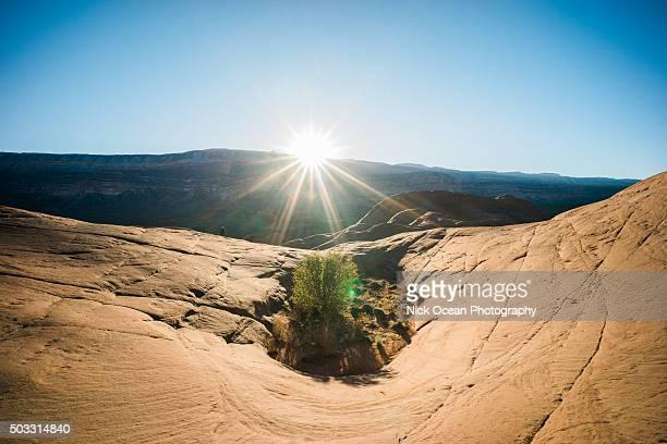 escalante canyon, colorado fall 2015 - stoking stock pictures, royalty-free photos & images