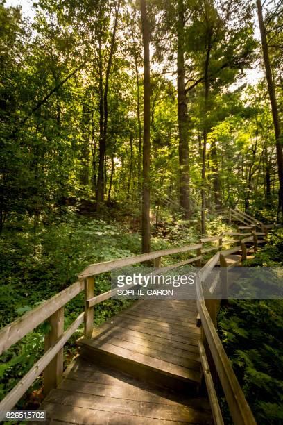 Escalier dans un boisé