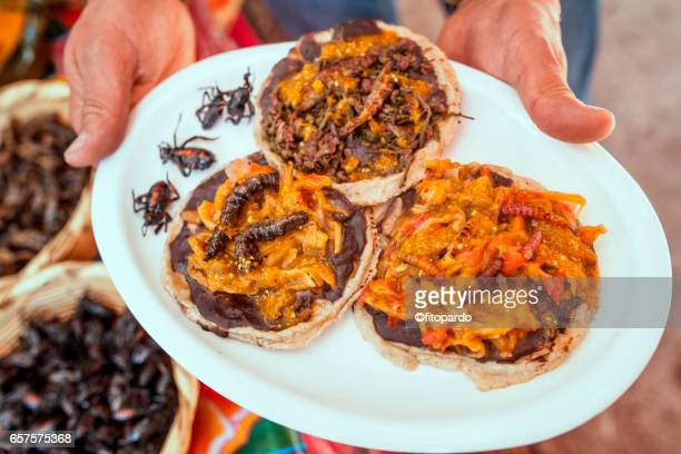 Escamoles, gusanos de Maguey, Chinicuil, Chahuis  and chapulines (grasshoppers) edible insects