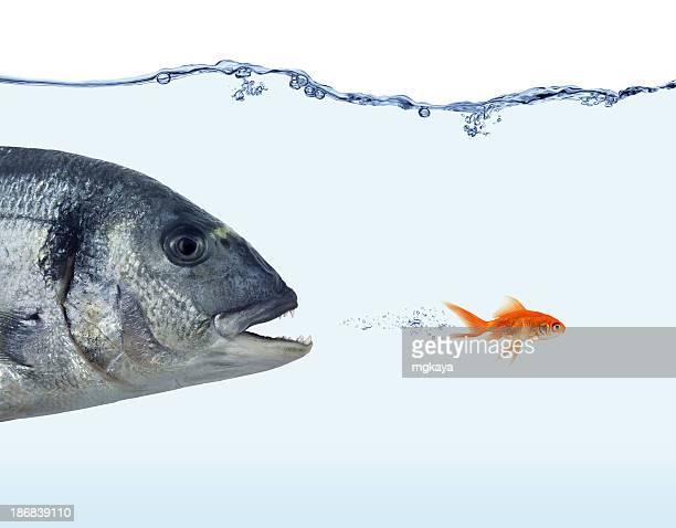Escape von Big Fish