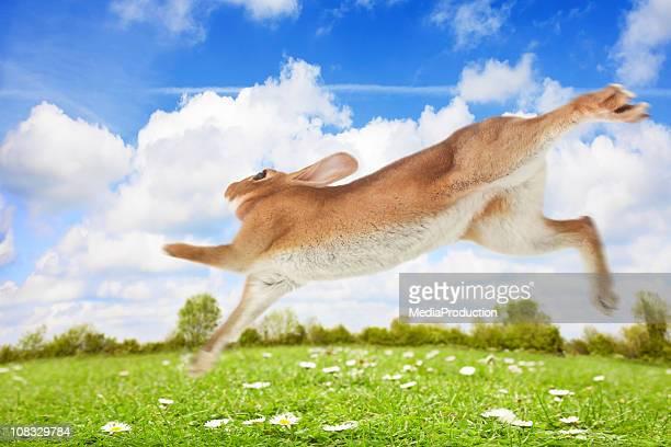 fuga - coniglietto foto e immagini stock