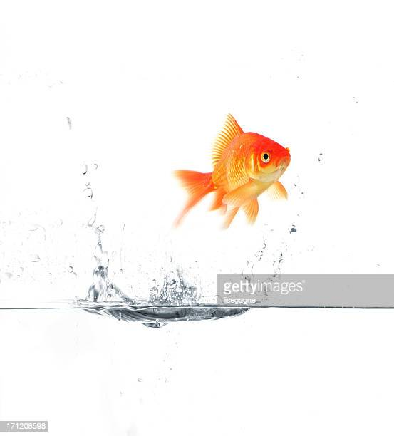 escape - goldfish leap stock pictures, royalty-free photos & images