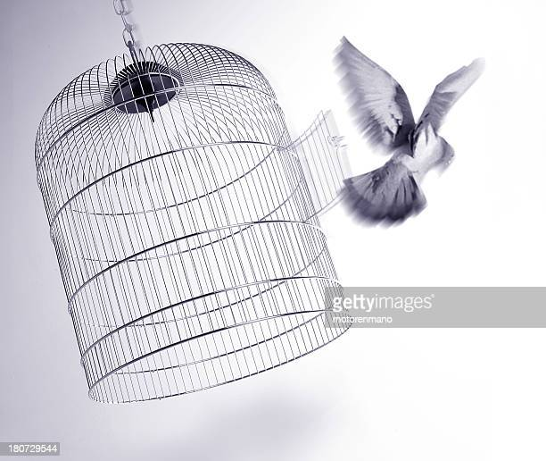 escape - bird stock photos and pictures