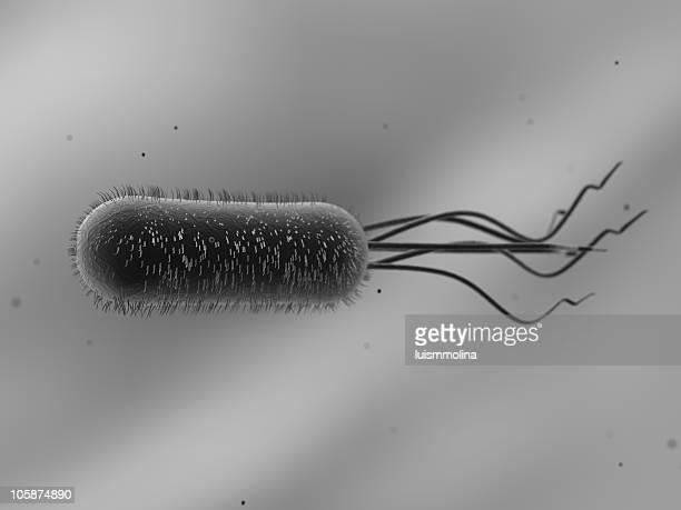 escherichia coli (e. coli.) - e coli stock photos and pictures