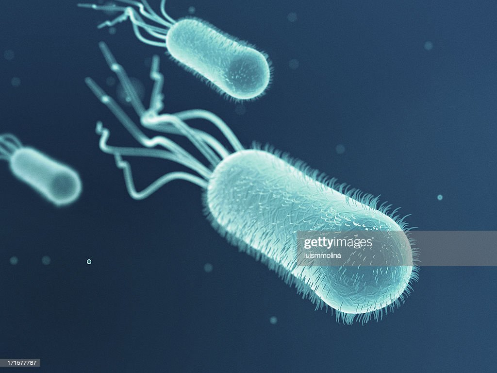 taking a look at escherichia coli Escherichia coli is a bacterium that exists as different strains some strains live in our gut and are very helpful others cause foodborne illness and disease while you were in school you may have learned that escherichia coli living in our large intestine is a helpful bacterium with many benefits.
