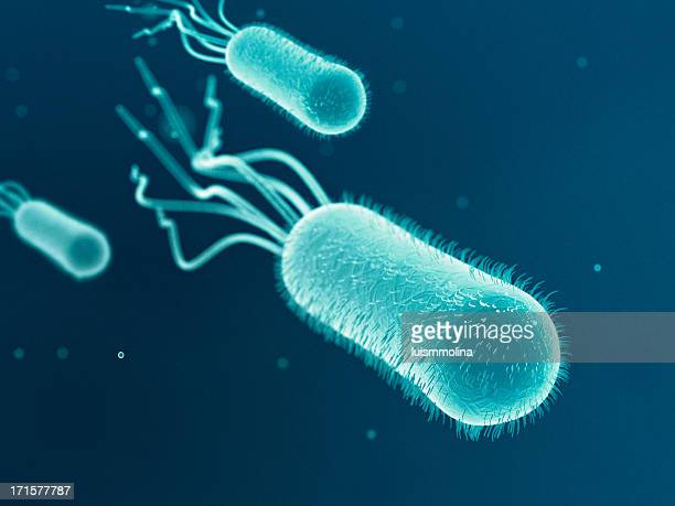 Escherichia Coli (ます。 Coli.)