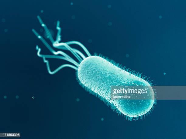 escherichia coli (e. coli.) - bacillus subtilis stock pictures, royalty-free photos & images