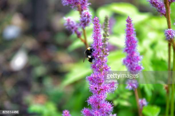 escocia - asian hornet stock pictures, royalty-free photos & images