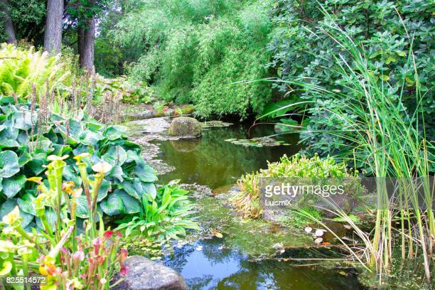 escocia - pond stock pictures, royalty-free photos & images