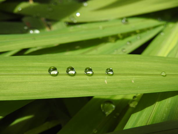 Esferas De Agua