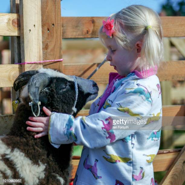 Esmay Duddin from Chopgate stands with her Jacob Sheep called Marvin during 152nd the Ryedale Country Show on July 31 2018 in Kirbymoorside England...