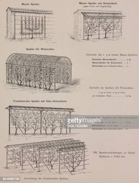 Espaliers for growing fruit engraving Skizzen und Typen plate 161 designs by Rudolph Philip Waagner 1891