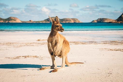 Esperance Kangaroo beach 653428384