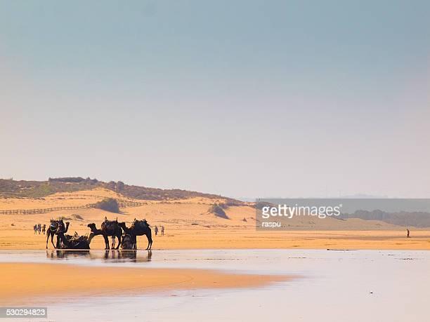 Essaouira beach in Morocco