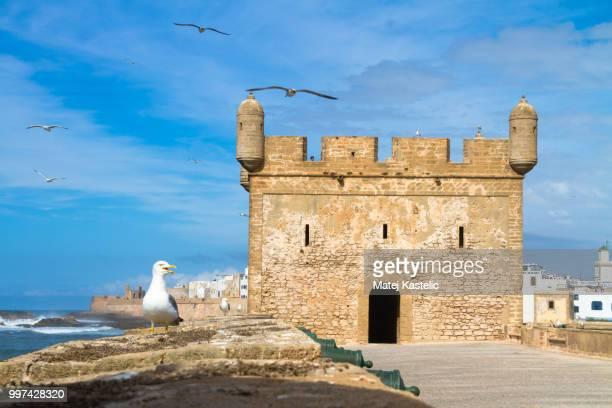 essaouira - magador, marrakech, morocco. - fife scotland stock pictures, royalty-free photos & images