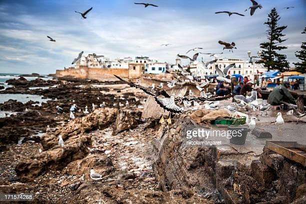 Essaouria, Morocco:  sorting the catch