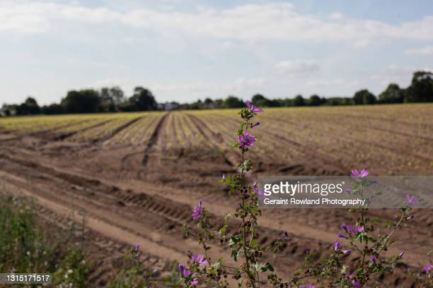 essex landscapes - geraint rowland stock pictures, royalty-free photos & images