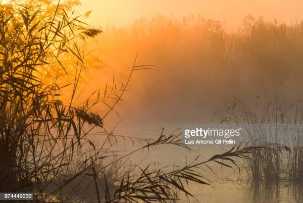 estany de almenara lake at sunrise, valencia, spain - marsh stock pictures, royalty-free photos & images