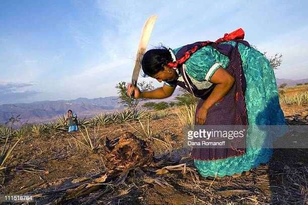 Ester Cruz Cruz chops firewood on February 16 2008 near the city of Tlacolula Ester's five brothers live in the United States leaving Ester and her...